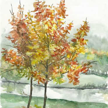 autumn maples watercolor water color painting art irish artist